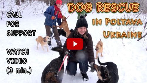 Tierheim für Straßenhunde in Poltawa