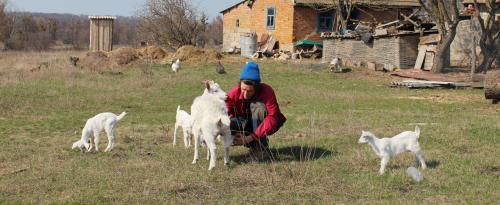 Chruli an der Sula: Pawlo und die Zicken