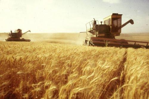 Der Getreidemarkt: Neue Ernte, alte Probleme