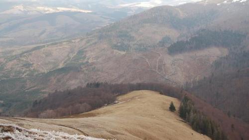 Abholzungen in den Karpaten
