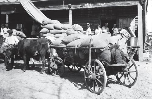 Getreideabgabe im Gebiet Kyjiw 1932
