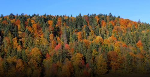 Herbstwald in den Gorgany
