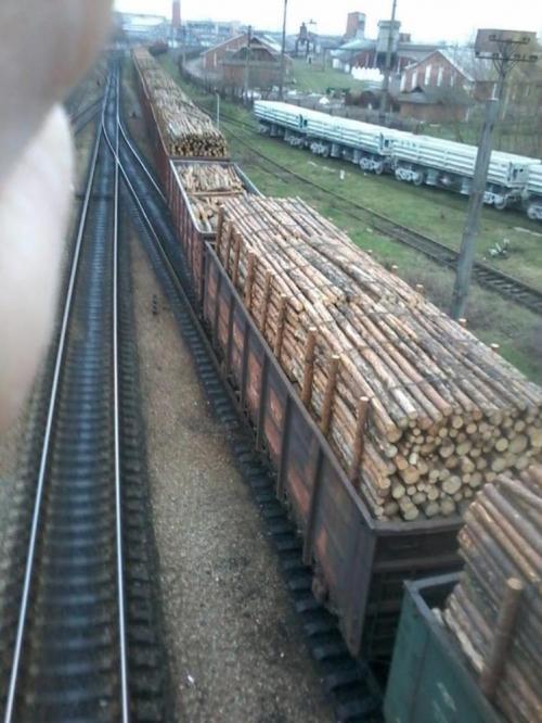 Holztransport vor der Grenze