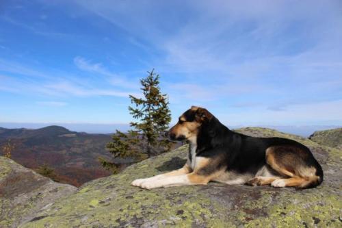 Hund auf einem Felsen in den Gorgany
