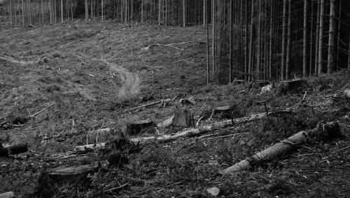 Die Holzfäller sahen unglücklich aus, vom Leben gezeichnet.