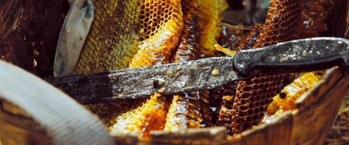 Der Unterschied zwischen dem Honig aus Beuten und aus Wabenrahmen ist ganz erheblich