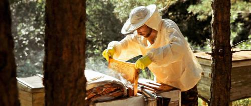 Maxym zog aufs Land und beschäftigte sich mit Bienen