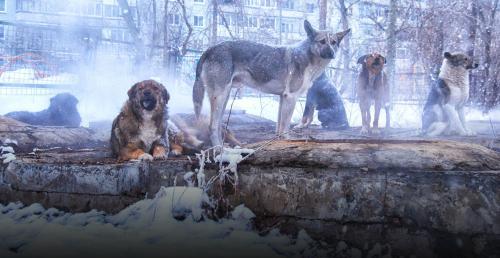 streunende Hunde